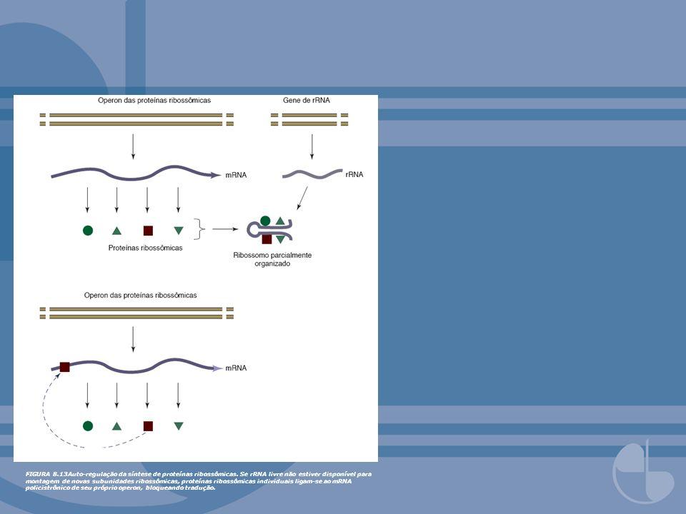FIGURA 8. 13Auto-regulação da síntese de proteínas ribossômicas