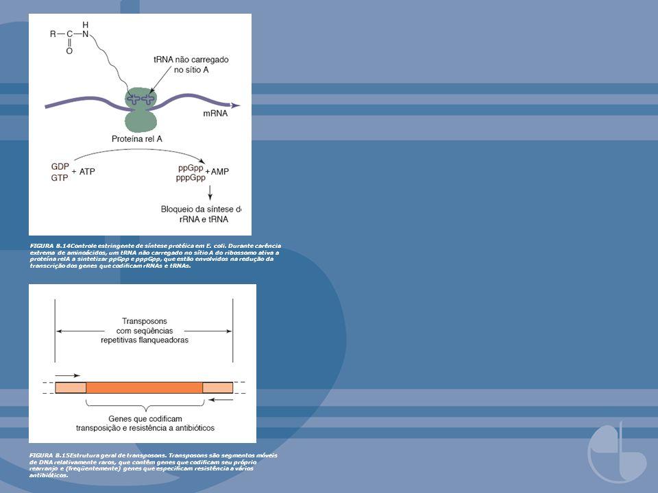 FIGURA 8. 14Controle estringente de síntese protéica em E. coli