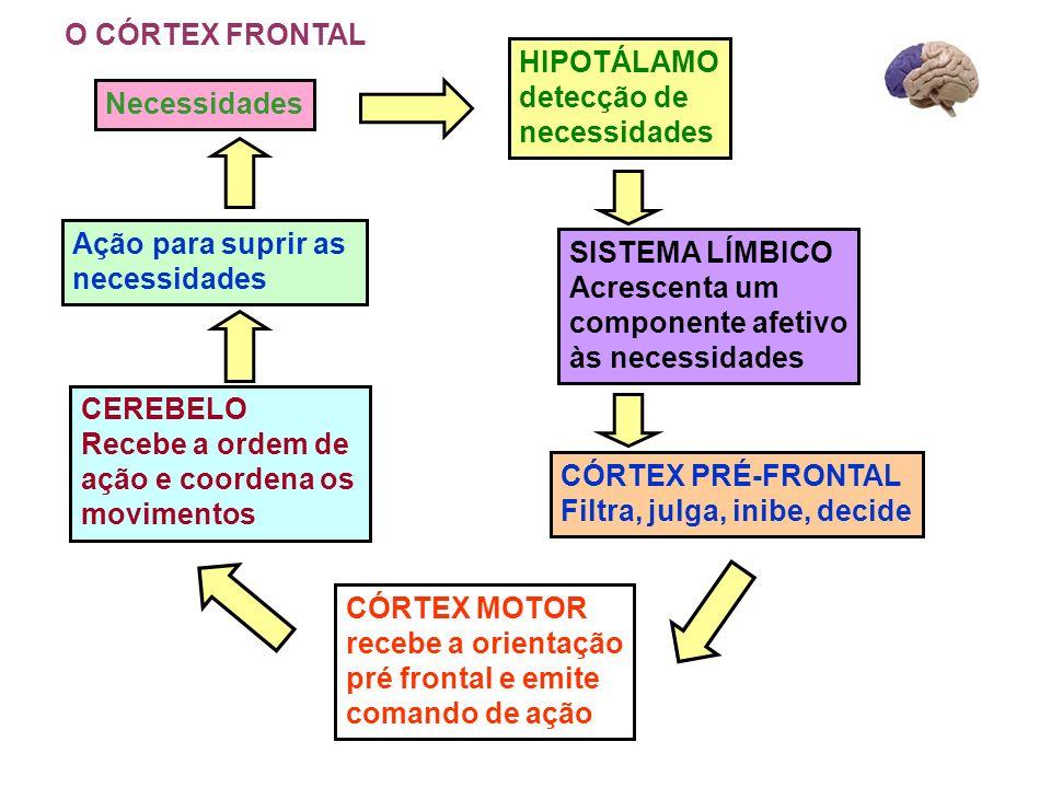 O CÓRTEX FRONTAL HIPOTÁLAMO. detecção de. necessidades. Necessidades. Ação para suprir as. necessidades.