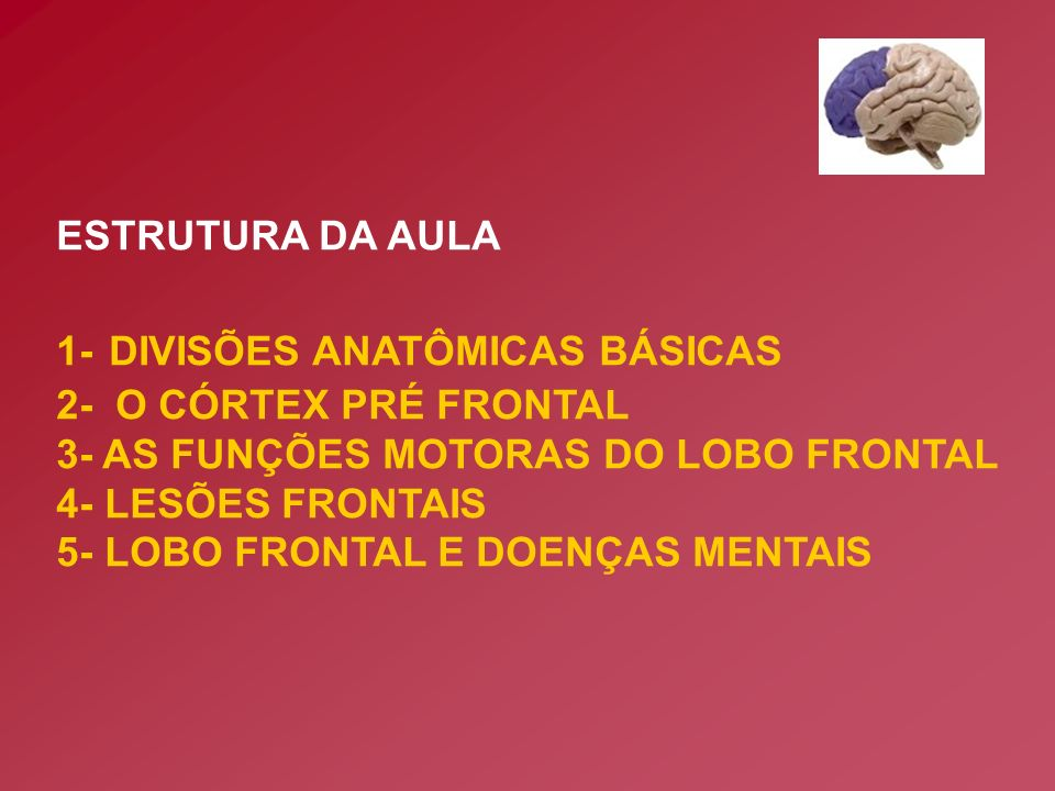 ESTRUTURA DA AULA 1- DIVISÕES ANATÔMICAS BÁSICAS. 2- O CÓRTEX PRÉ FRONTAL. 3- AS FUNÇÕES MOTORAS DO LOBO FRONTAL.