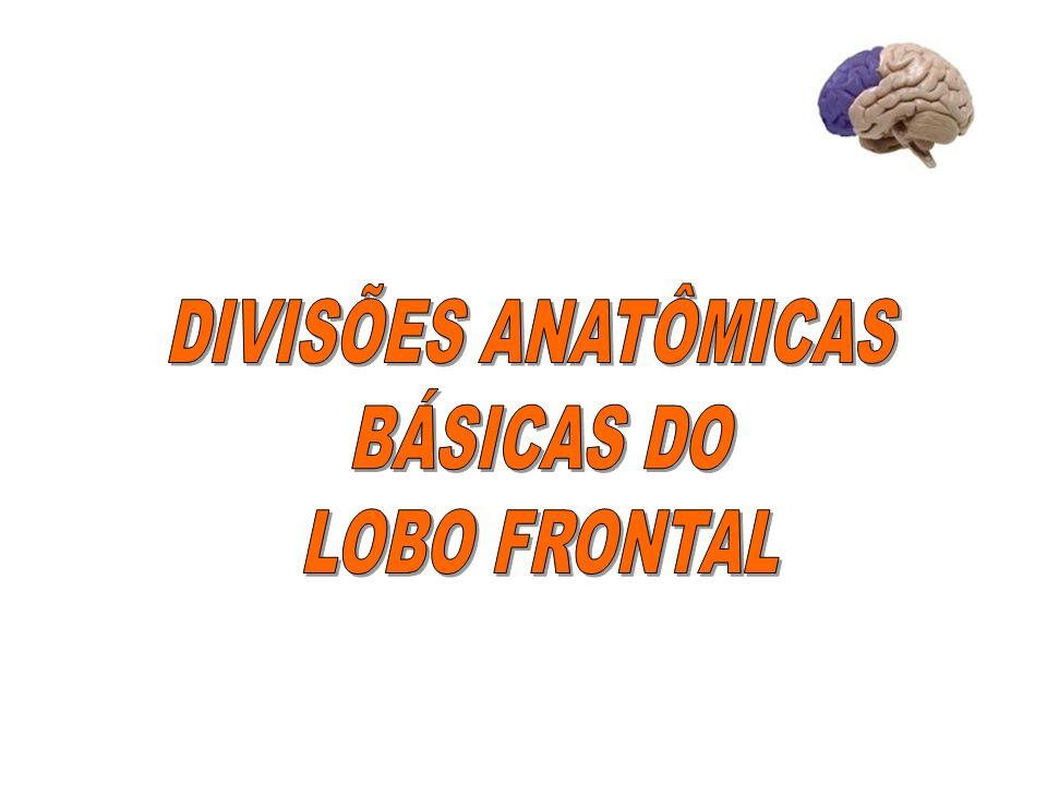 DIVISÕES ANATÔMICAS BÁSICAS DO LOBO FRONTAL