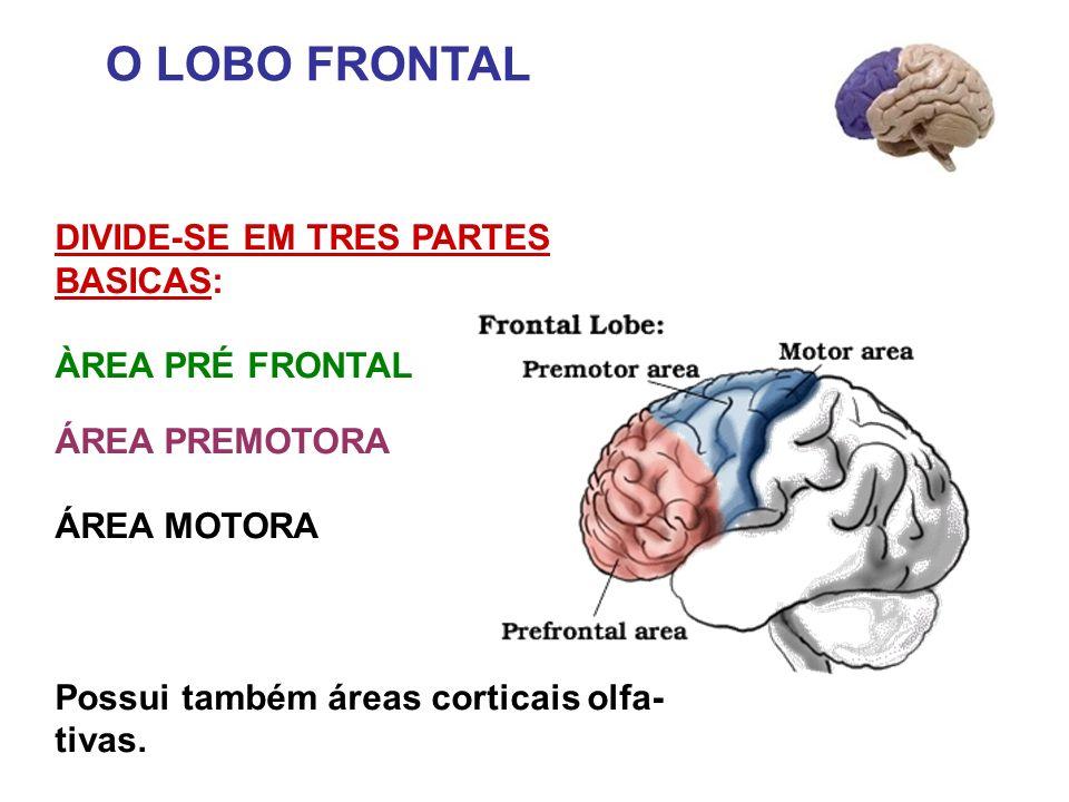 O LOBO FRONTAL DIVIDE-SE EM TRES PARTES BASICAS: ÀREA PRÉ FRONTAL