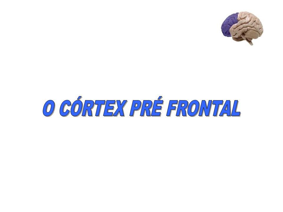 O CÓRTEX PRÉ FRONTAL