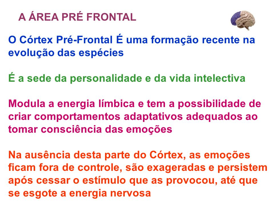 A ÁREA PRÉ FRONTAL O Córtex Pré-Frontal É uma formação recente na evolução das espécies. É a sede da personalidade e da vida intelectiva.