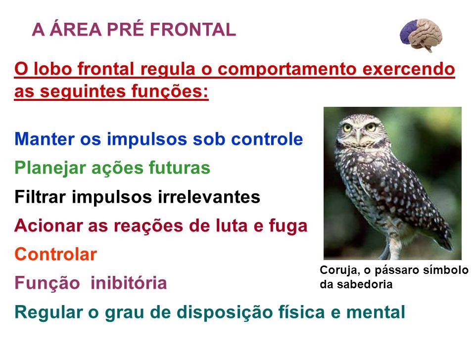 O lobo frontal regula o comportamento exercendo as seguintes funções: