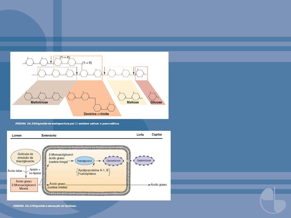FIGURA 26.26Digestão da amilopectina por -amilase salivar e pancreática.