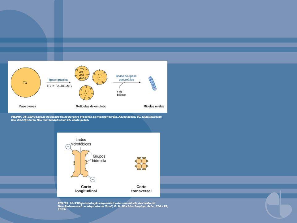FIGURA 26.28Mudanças de estado físico durante digestão de triacilgliceróis. Abreviações: TG, triacilglicerol; DG, diacilglicerol; MG, monoacilglicerol; FA, ácido graxo.