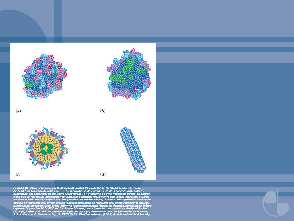 FIGURA 26.34Estrutura proposta de micelas mistas de ácido biliar-fosfatidil colina.