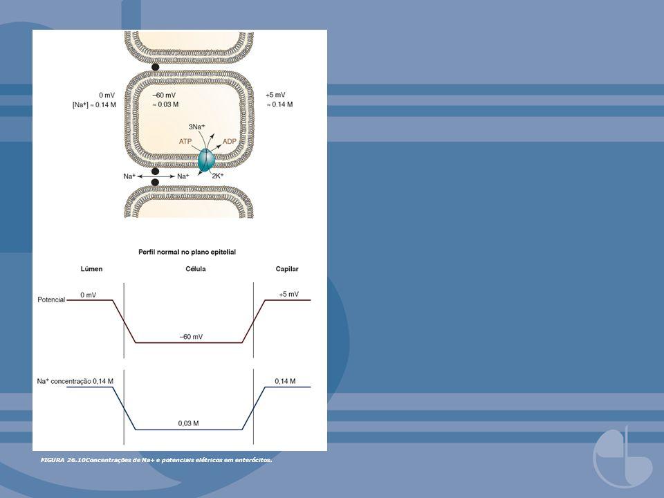 FIGURA 26.10Concentrações de Na+ e potenciais elétricos em enterócitos.