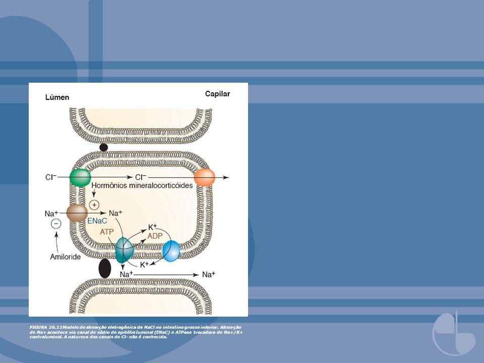 FIGURA 26.11Modelo de absorção eletrogênica de NaCl no intestino grosso inferior.
