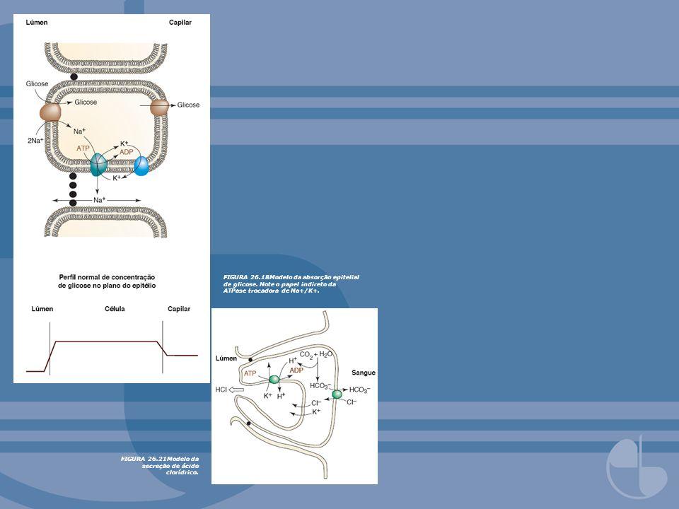 FIGURA 26. 18Modelo da absorção epitelial de glicose