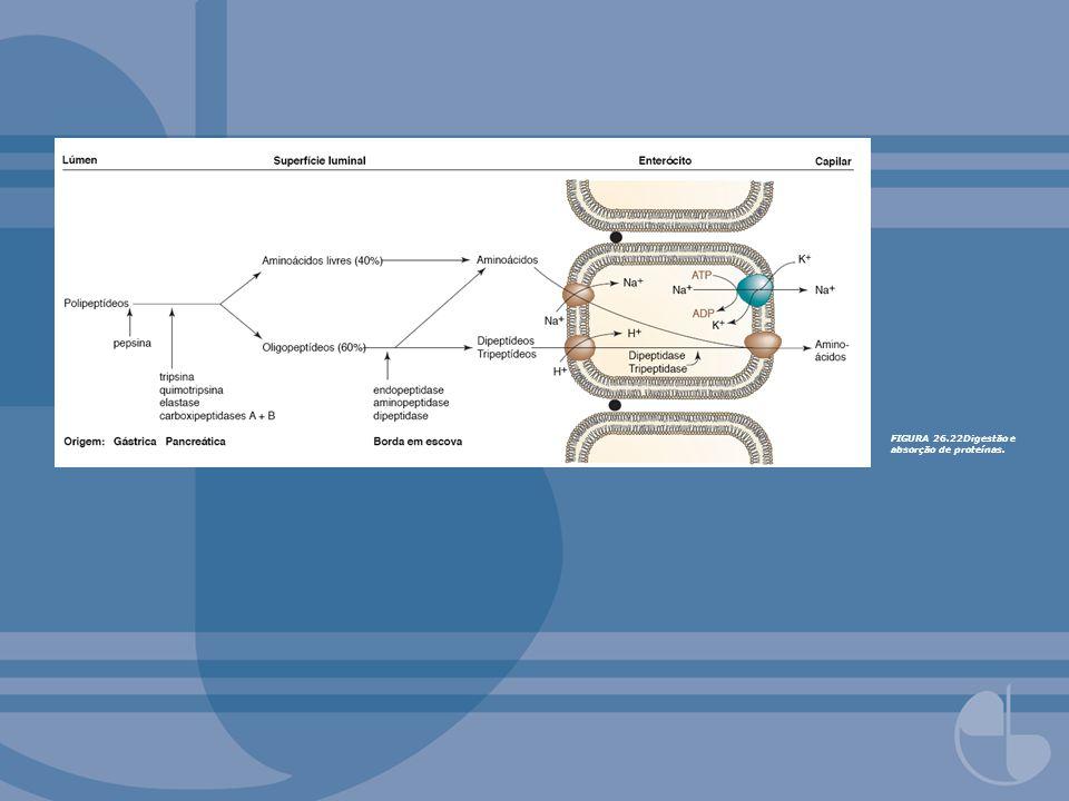 FIGURA 26.22Digestão e absorção de proteínas.