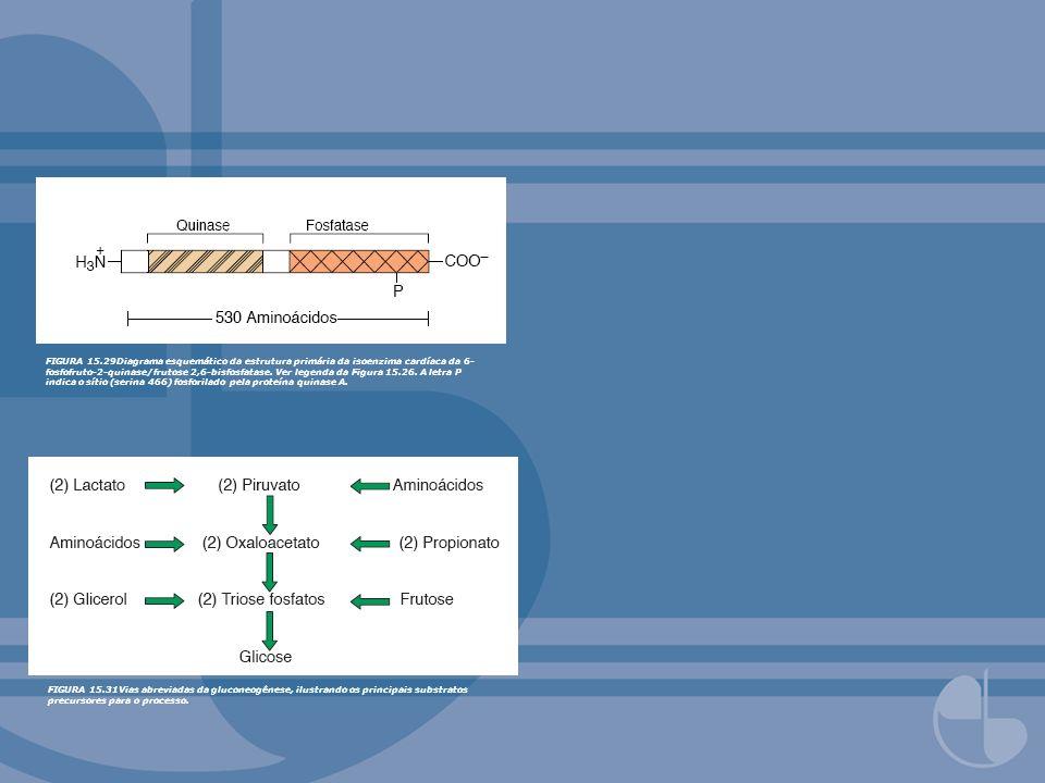 FIGURA 15.29Diagrama esquemático da estrutura primária da isoenzima cardíaca da 6-fosfofruto-2-quinase/frutose 2,6-bisfosfatase. Ver legenda da Figura 15.26. A letra P indica o sítio (serina 466) fosforilado pela proteína quinase A.