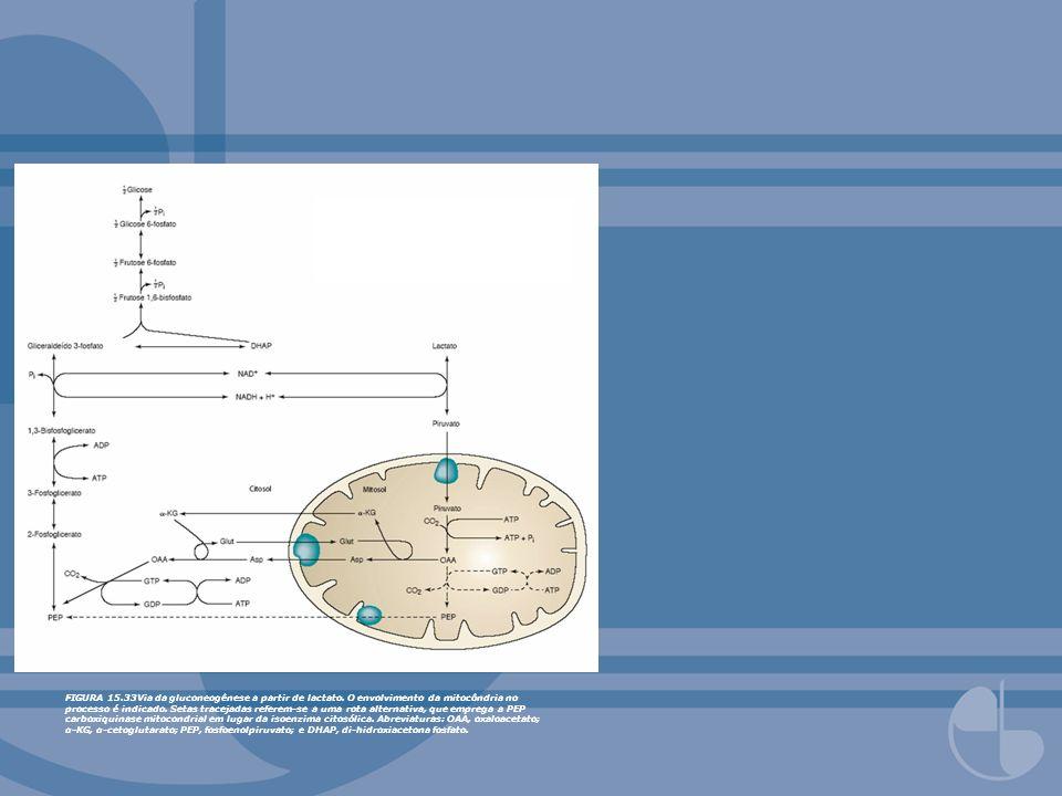 FIGURA 15. 33Via da gluconeogênese a partir de lactato