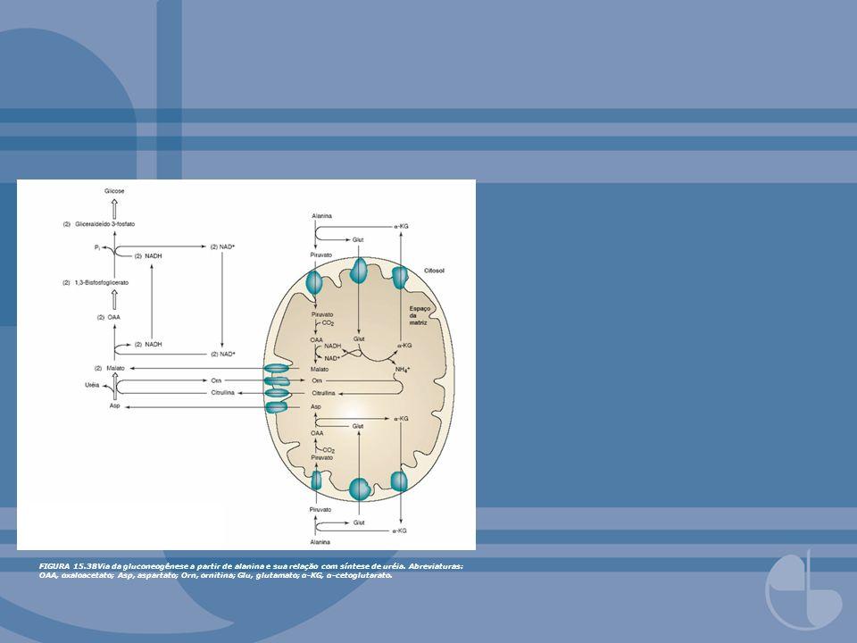 FIGURA 15.38Via da gluconeogênese a partir de alanina e sua relação com síntese de uréia.