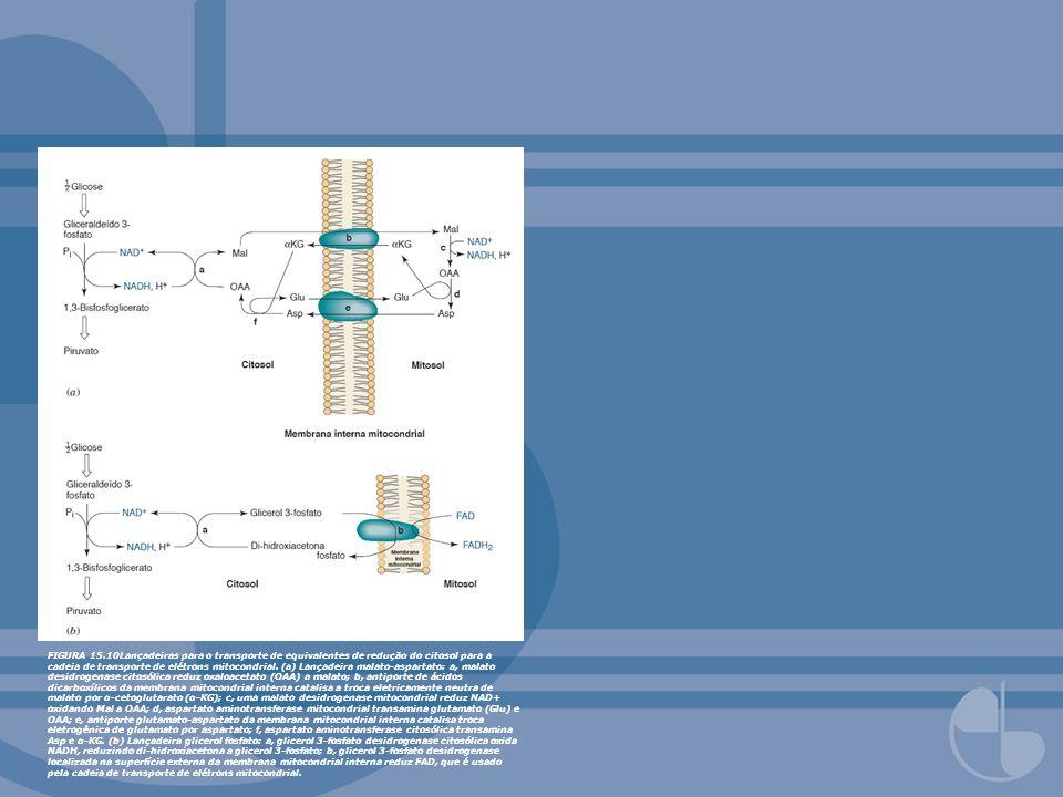 FIGURA 15.10Lançadeiras para o transporte de equivalentes de redução do citosol para a cadeia de transporte de elétrons mitocondrial.