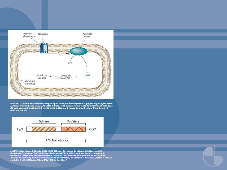 FIGURA 15. 19Mecanismo pelo qual glucagon inibe glicólise hepática