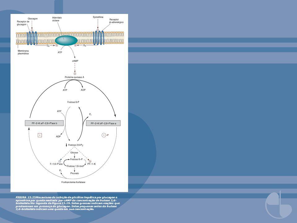 FIGURA 15.25Mecanismo de inibição da glicólise hepática por glucagon e epinefrina por queda mediada por cAMP da concentração de frutose 2,6-bisfosfato.Ver legenda da Figura 15.19.