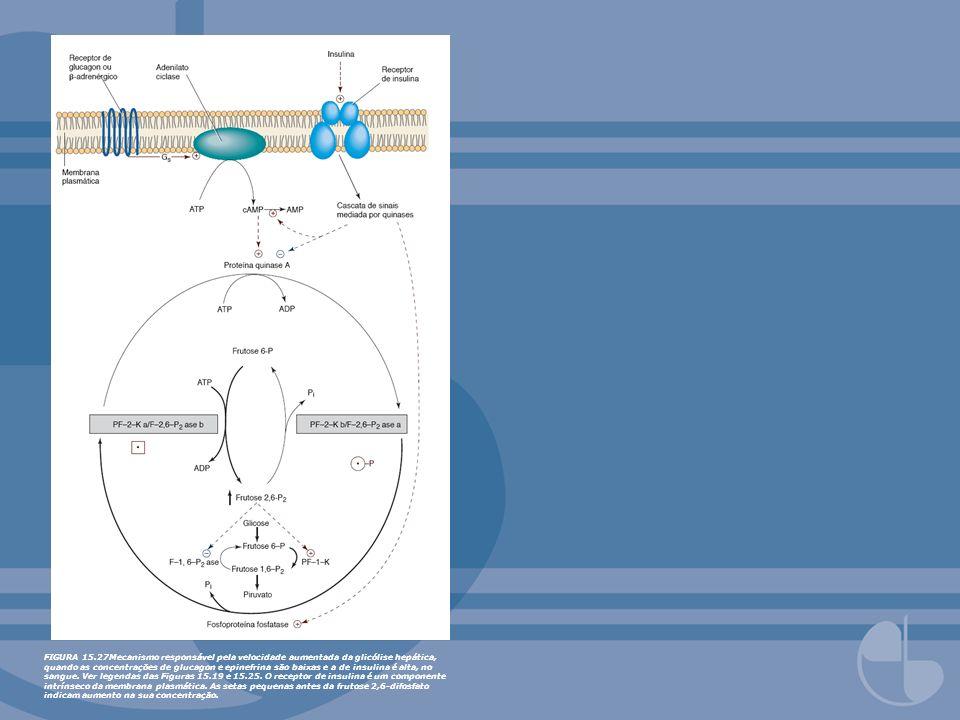 FIGURA 15.27Mecanismo responsável pela velocidade aumentada da glicólise hepática, quando as concentrações de glucagon e epinefrina são baixas e a de insulina é alta, no sangue.