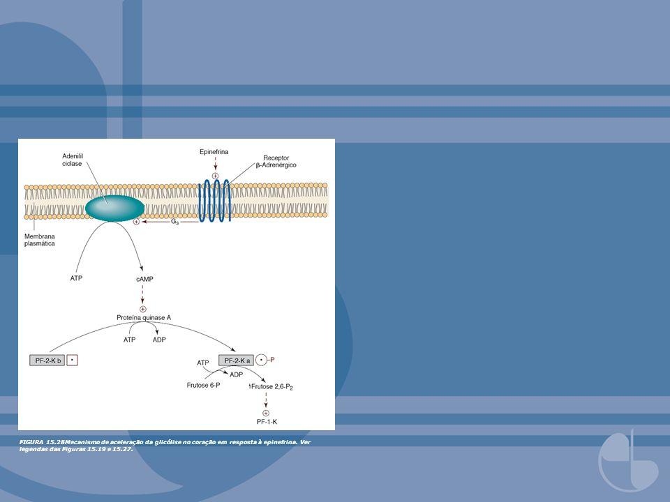 FIGURA 13.12Neurotransmissores excitatórios versus inibitórios como agonistas para receptores canais iônicos ligante-dependentes.