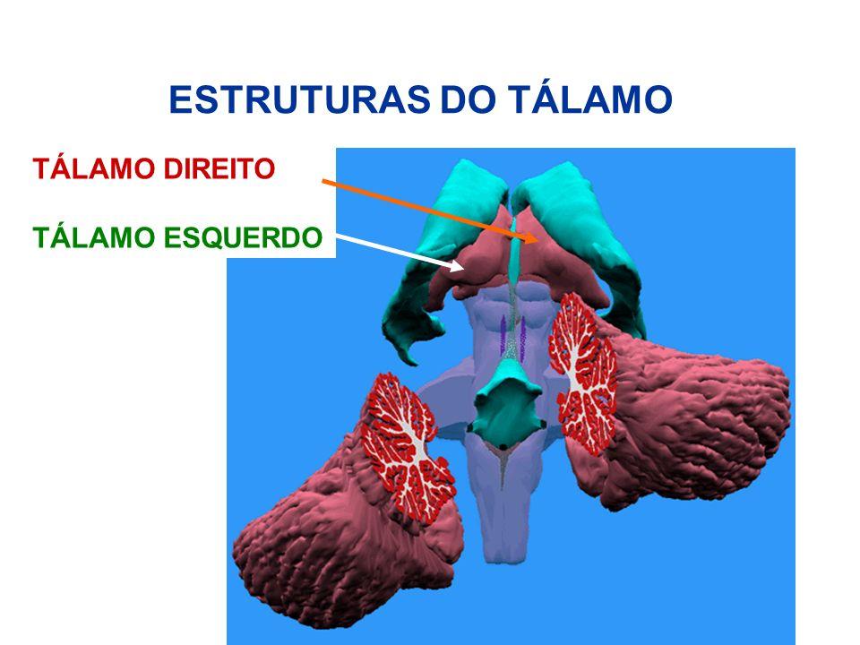 ESTRUTURAS DO TÁLAMO TÁLAMO DIREITO TÁLAMO ESQUERDO