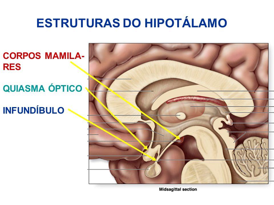 ESTRUTURAS DO HIPOTÁLAMO