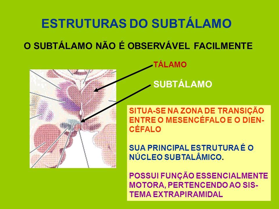 ESTRUTURAS DO SUBTÁLAMO