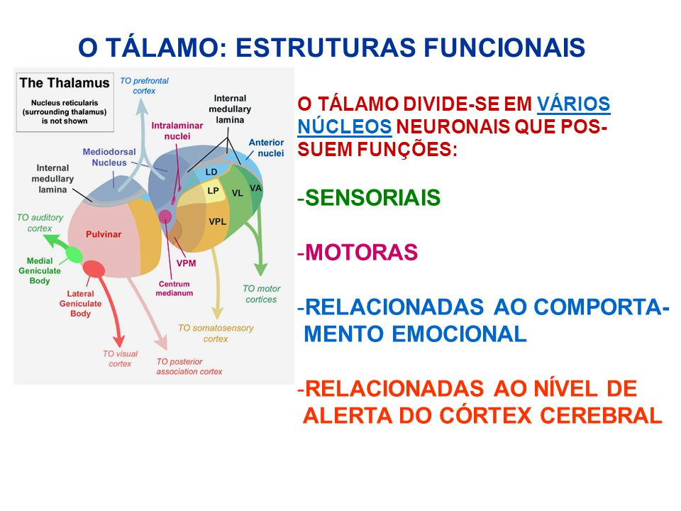 O TÁLAMO: ESTRUTURAS FUNCIONAIS