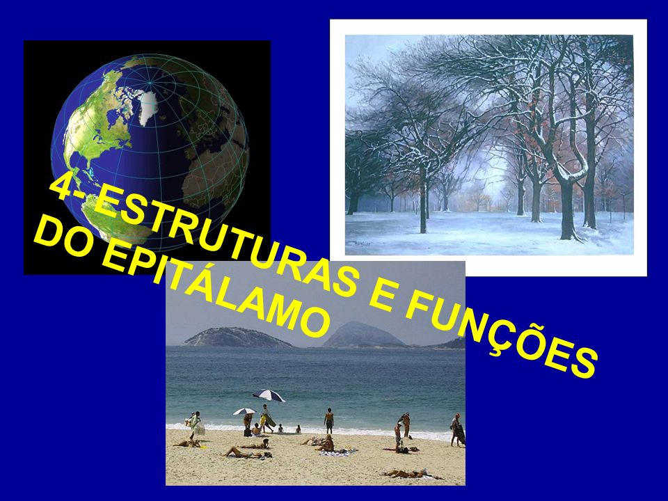 4- ESTRUTURAS E FUNÇÕES DO EPITÁLAMO
