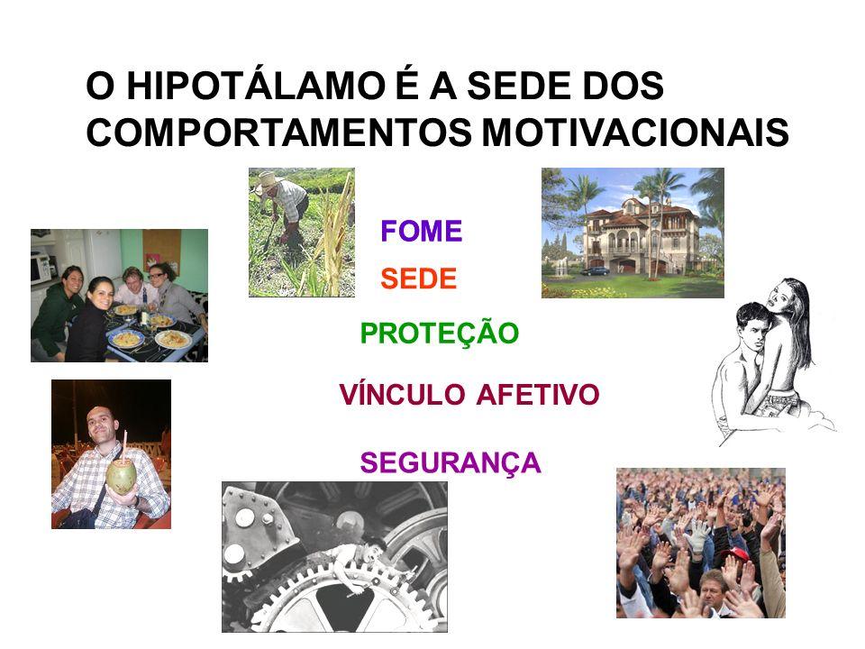 O HIPOTÁLAMO É A SEDE DOS COMPORTAMENTOS MOTIVACIONAIS