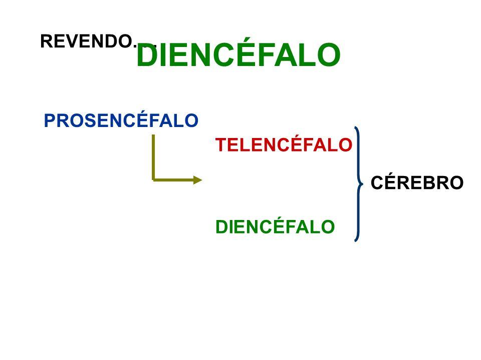 REVENDO..... DIENCÉFALO PROSENCÉFALO TELENCÉFALO DIENCÉFALO CÉREBRO