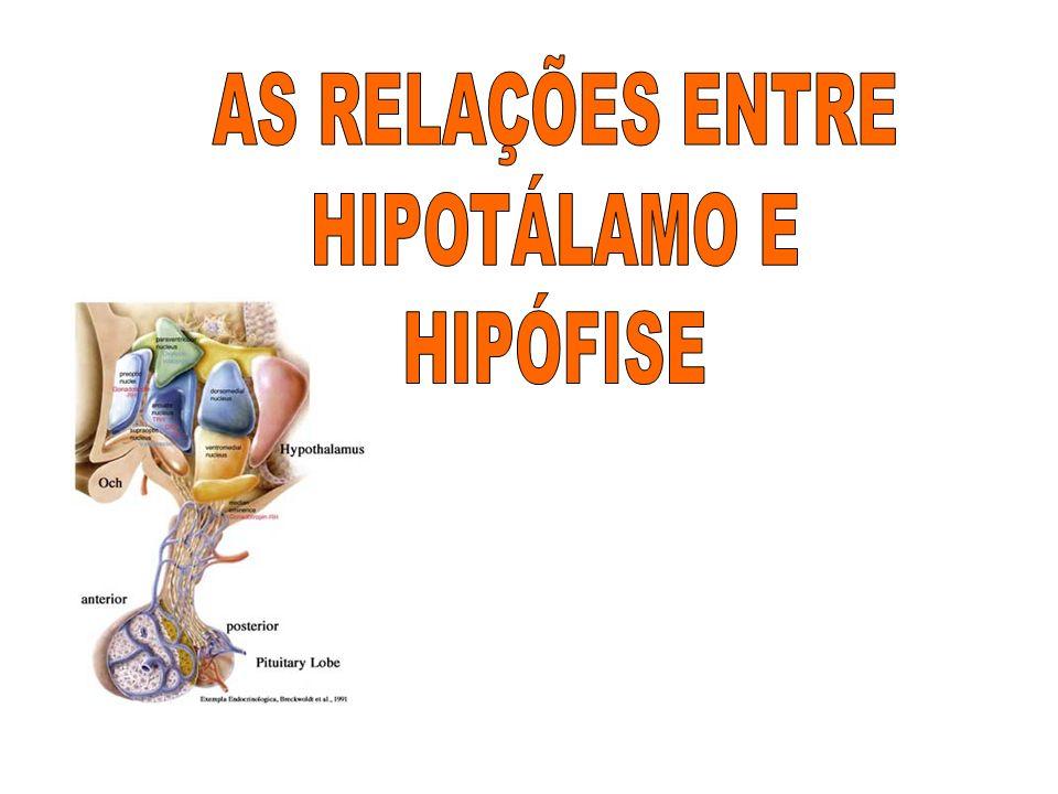 AS RELAÇÕES ENTRE HIPOTÁLAMO E HIPÓFISE