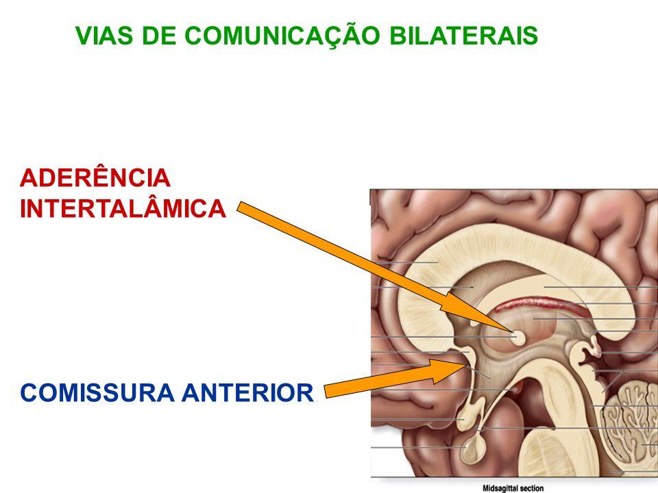 VIAS DE COMUNICAÇÃO BILATERAIS
