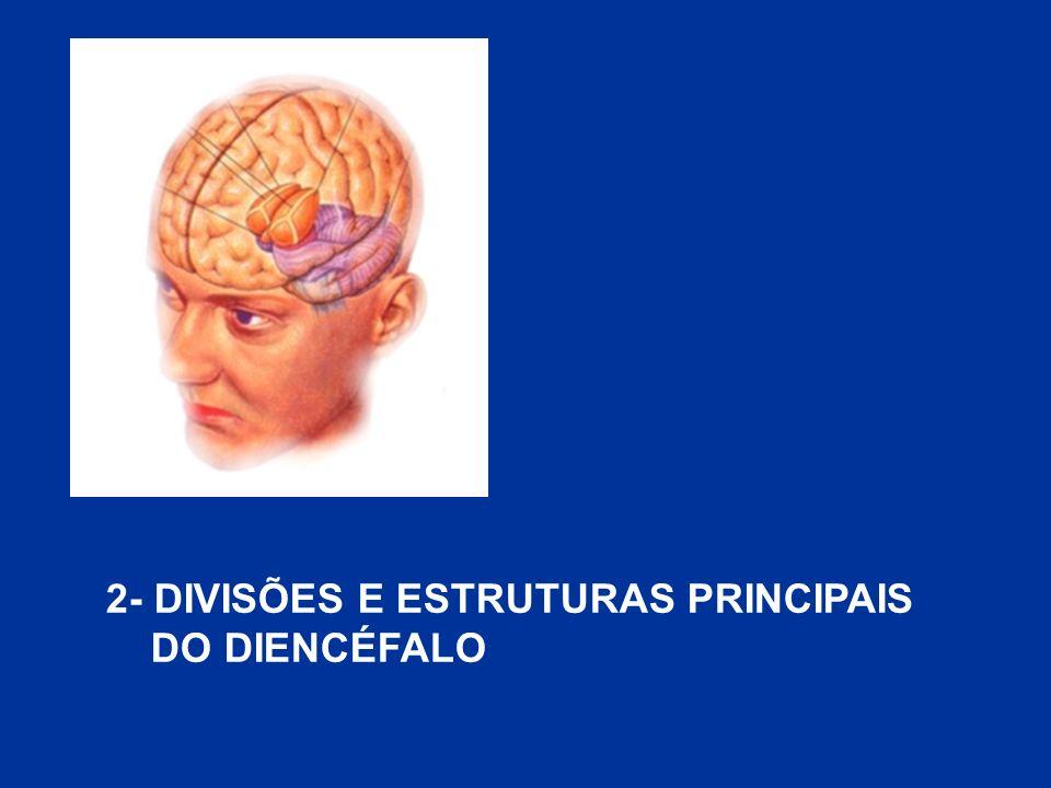 2- DIVISÕES E ESTRUTURAS PRINCIPAIS