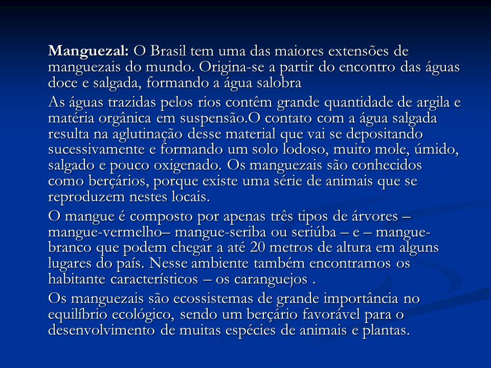 Manguezal: O Brasil tem uma das maiores extensões de manguezais do mundo. Origina-se a partir do encontro das águas doce e salgada, formando a água salobra