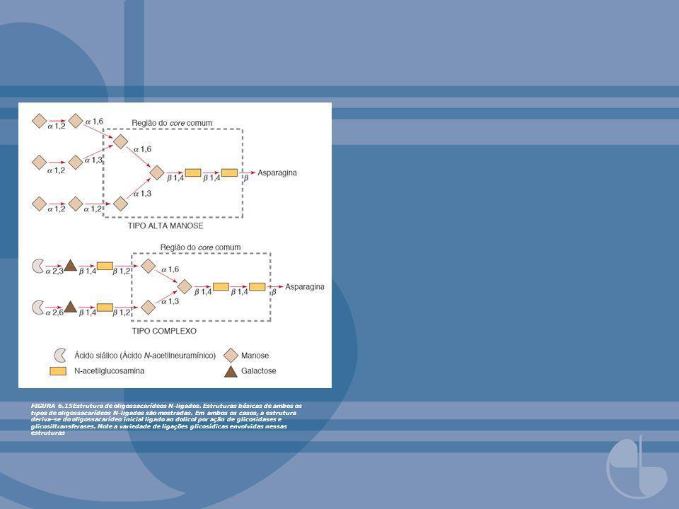 FIGURA 6. 15Estrutura de oligossacarídeos N-ligados