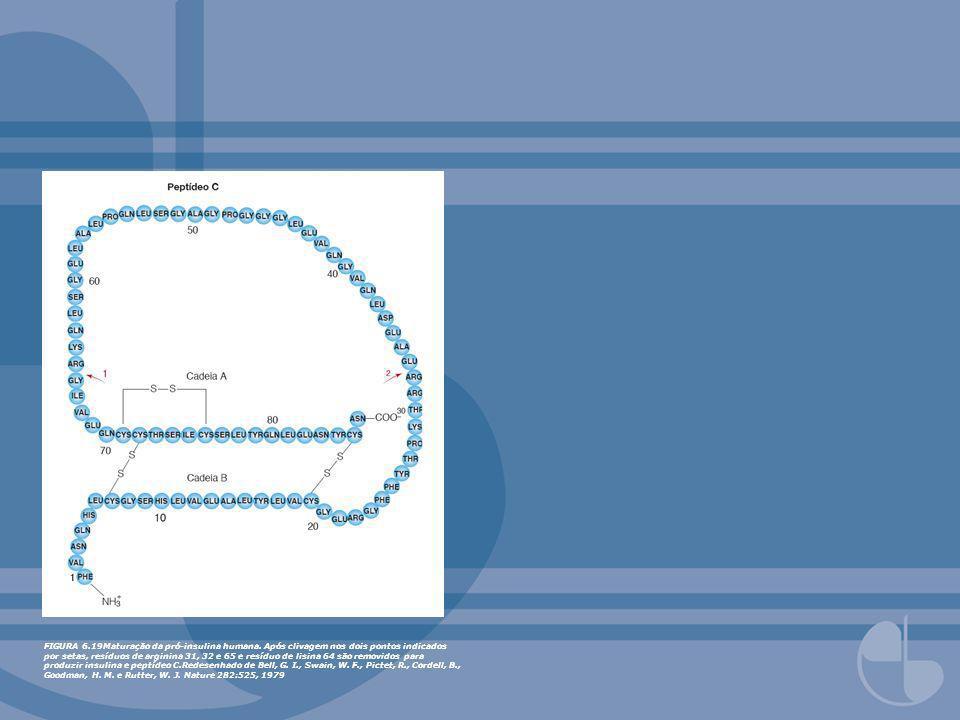 FIGURA 6. 19Maturação da pró-insulina humana