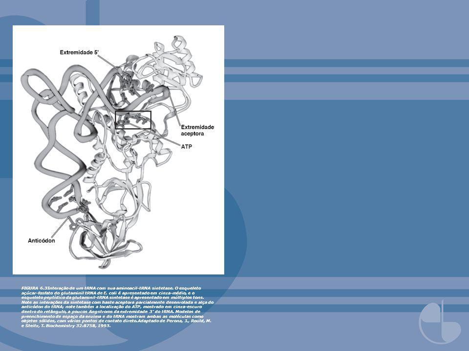 FIGURA 6. 3Interação de um tRNA com sua aminoacil-tRNA sintetase
