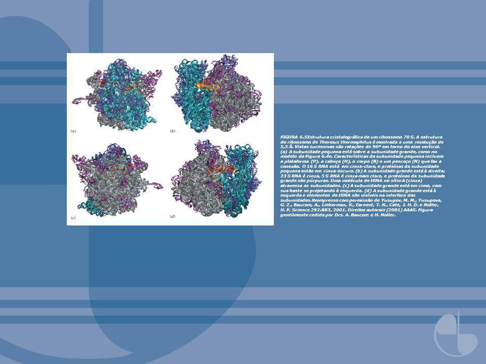FIGURA 6. 5Estrutura cristalográfica de um ribossomo 70 S