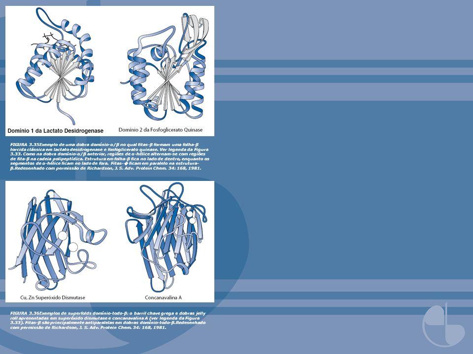 FIGURA 3.35Exemplo de uma dobra domínio-α/β no qual fitas-β formam uma folha-β torcida clássica em lactato desidrogenase e fosfoglicerato quinase. Ver legenda da Figura 3.33. Como na dobra domínio-α/β anterior, regiões de α-hélice alternam-se com regiões de fita-β na cadeia polipeptídica. Estrutura em folha-β fica no lado de dentro, enquanto os segmentos de α-hélice ficam no lado de fora. Fitas-� ficam em paralelo na estrutura-β.Redesenhado com permissão de Richardson, J. S. Adv. Protein Chem. 34: 168, 1981.