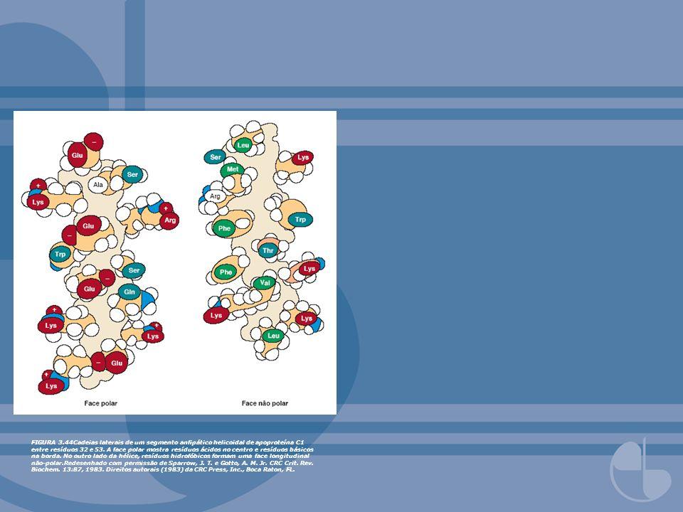 FIGURA 3.44Cadeias laterais de um segmento anfipático helicoidal de apoproteína C1 entre resíduos 32 e 53.