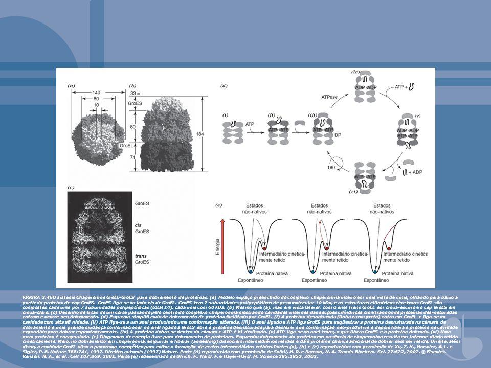 FIGURA 3.46O sistema Chaperonina GroEL-GroES para dobramento de proteínas.