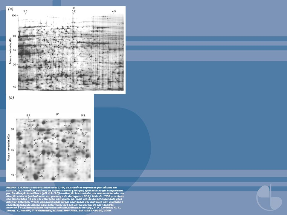 FIGURA 3.63Resultado bidimensional (2-D) de proteínas expressas por células em cultura.