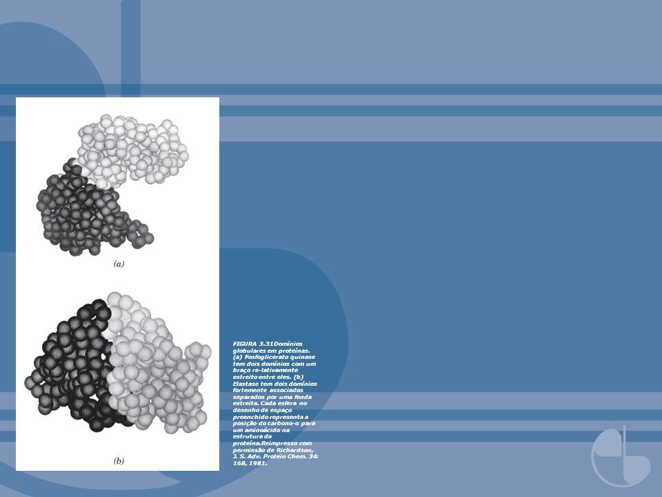 FIGURA 3. 31Domínios globulares em proteínas