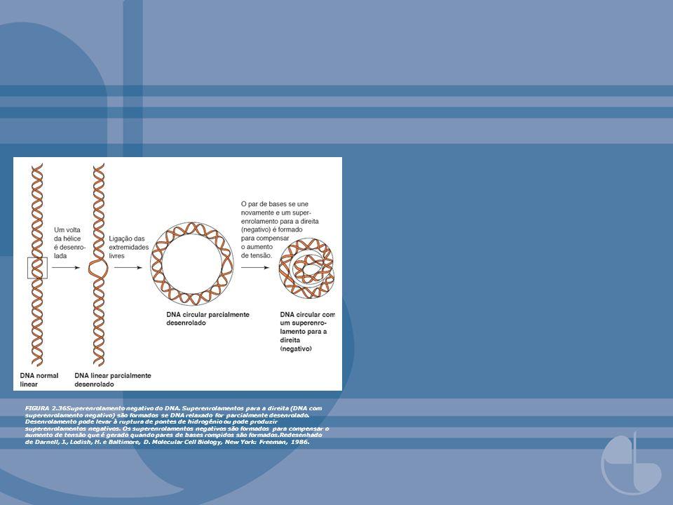 FIGURA 2. 36Superenrolamento negativo do DNA
