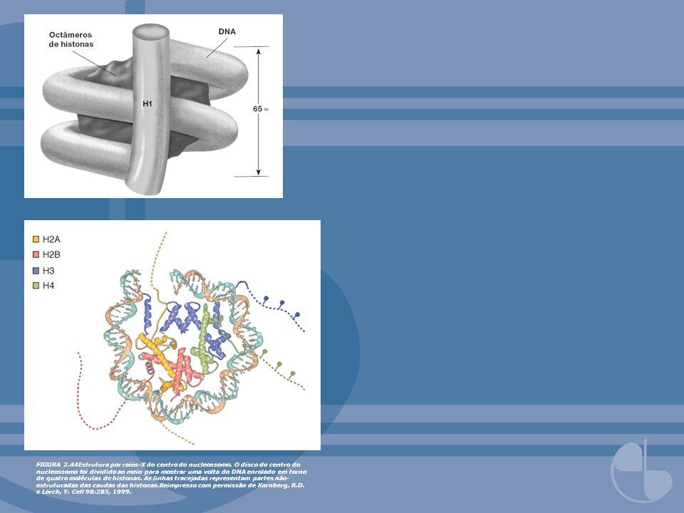 FIGURA 2. 44Estrutura por raios-X do centro do nucleossomo