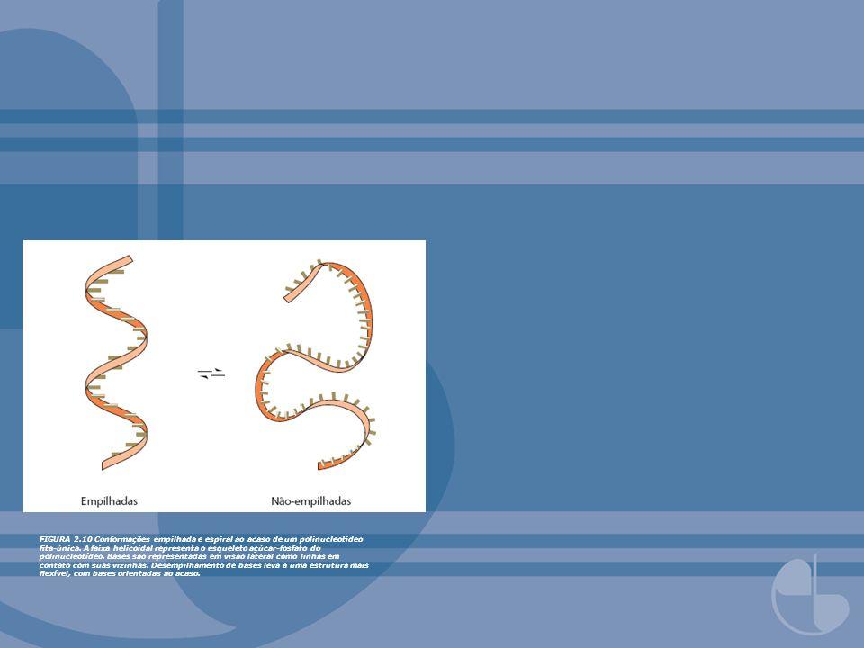 FIGURA 2.10 Conformações empilhada e espiral ao acaso de um polinucleotídeo fita-única.
