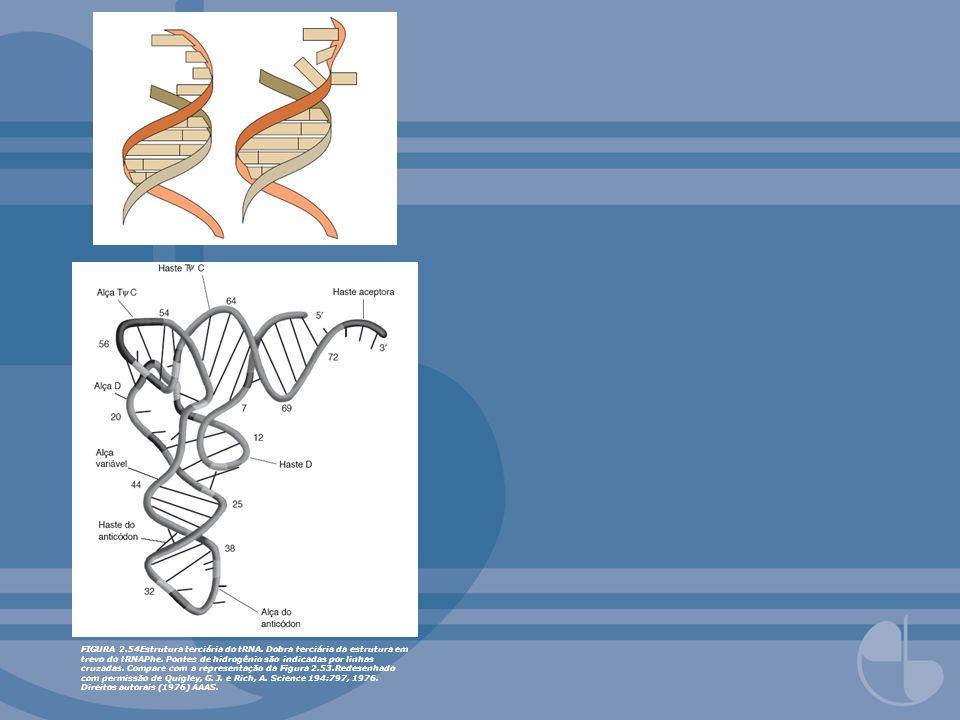 FIGURA 2. 54Estrutura terciária do tRNA