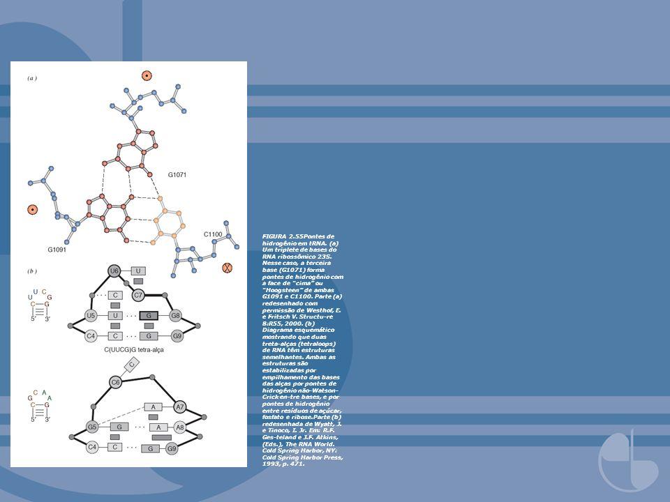 FIGURA 2. 55Pontes de hidrogênio em tRNA