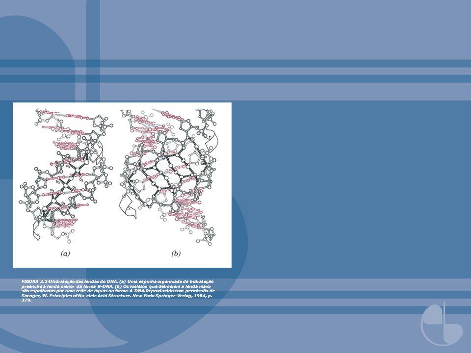 FIGURA 2. 24Hidratação das fendas do DNA